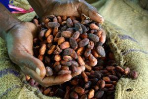 Le Cameroun à la veille d'une révolution dans les subventions agricoles